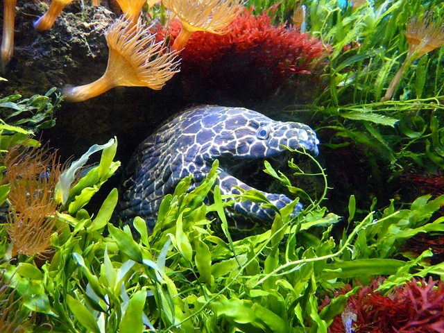 Free Photos: Moray water underwater aquarium sea anemone fish | M W