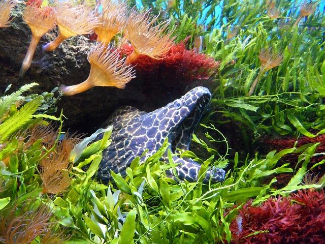 Free moray water underwater aquarium hidden waiting off