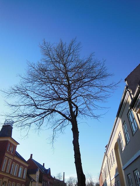 Free solitary tree street tree blue sky sunshine facades