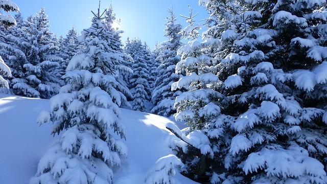 Free allgäu alpine pointed winter snow trees
