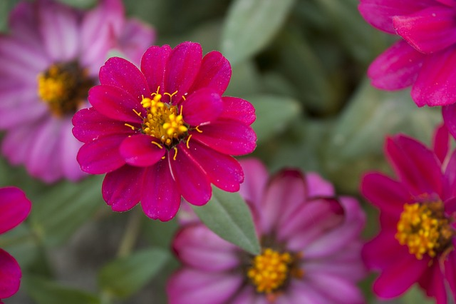 Free flower red red flower flowers nature