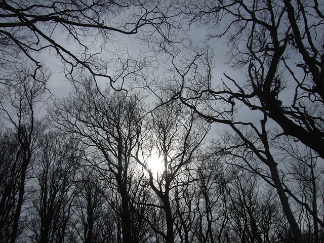 Free sky trees sun winter gloomy dark scary creepy