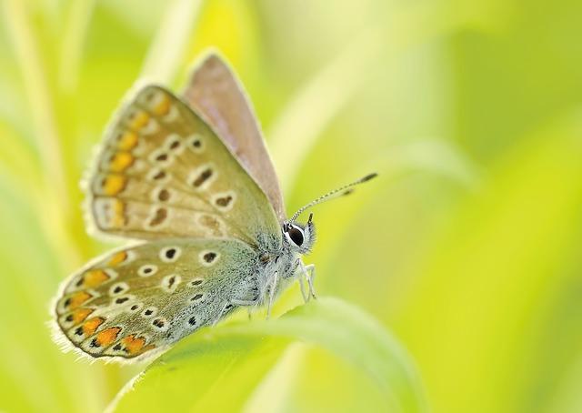 Free               butterflies insect bezkręgowiec macro nature