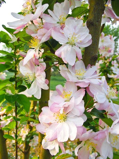 Free flower spring pink beautiful garden