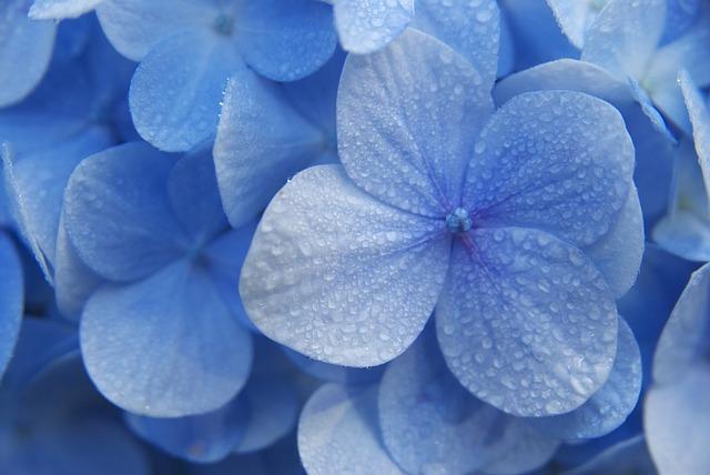 Free Photos: Flower blue madagascar blue flowers purple flowers | Takeweb