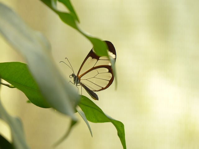 Free butterfly greta oto insect animal butterfly house