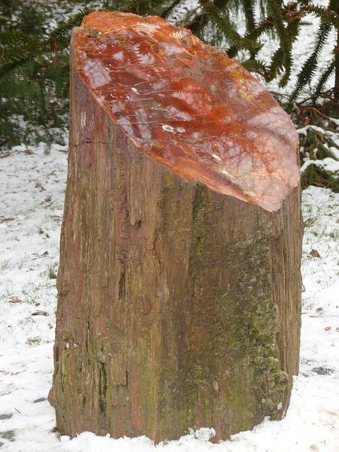 Free tribe log petrified petrified wood