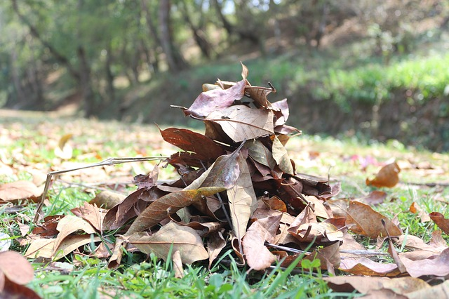 Free dry leafs winter leaf autumn brown leaf
