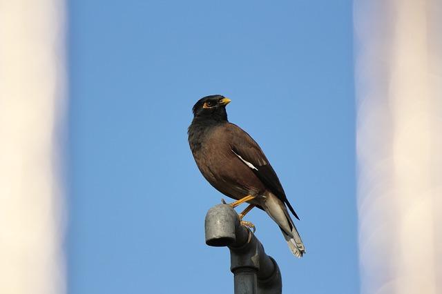 Free bird sky blue animal