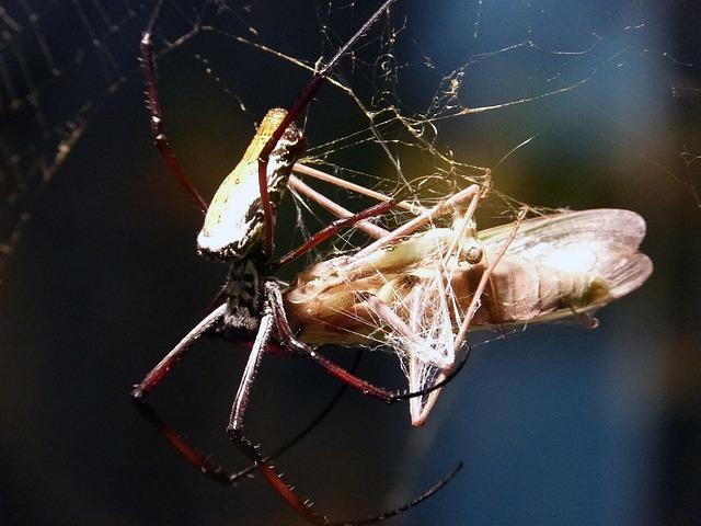 Free spider arachne animal predator feeding butterfly