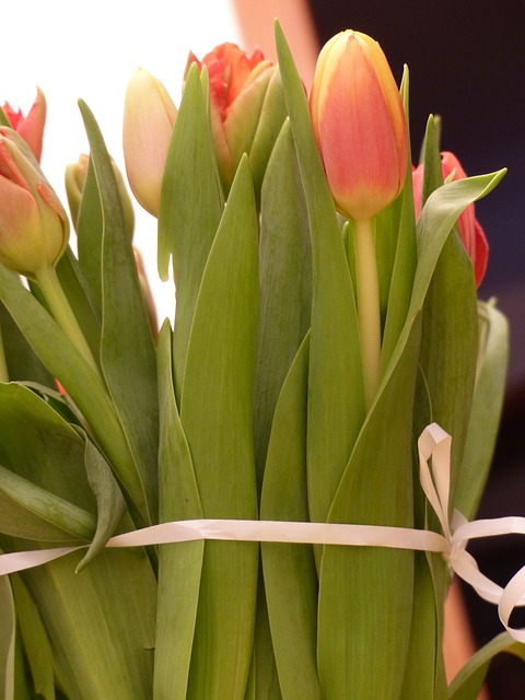 Free tulips flowers tulip spring bouquet tulip bouquet