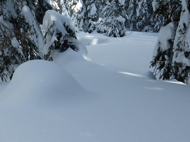 Free Photos: Fir firs trees snowy winter snow sky | Hans Braxmeier