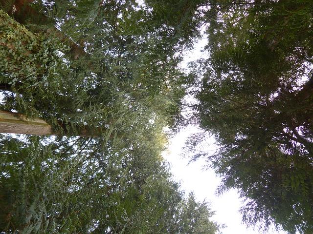 Free giant tree of life tree plant nature huge