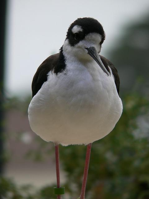 Free bird creature black white black white