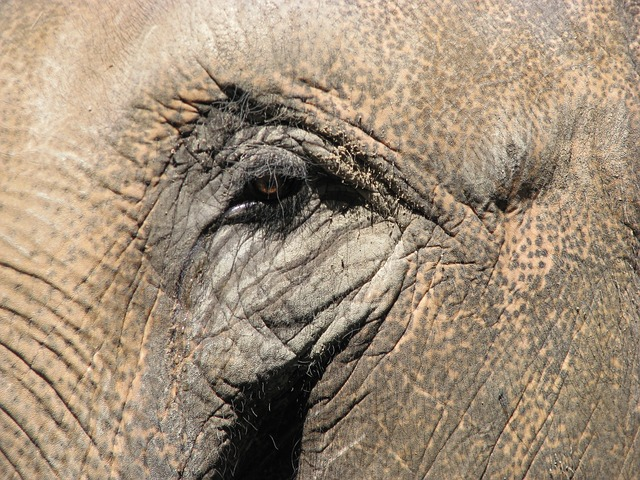Free elephant zoo africa