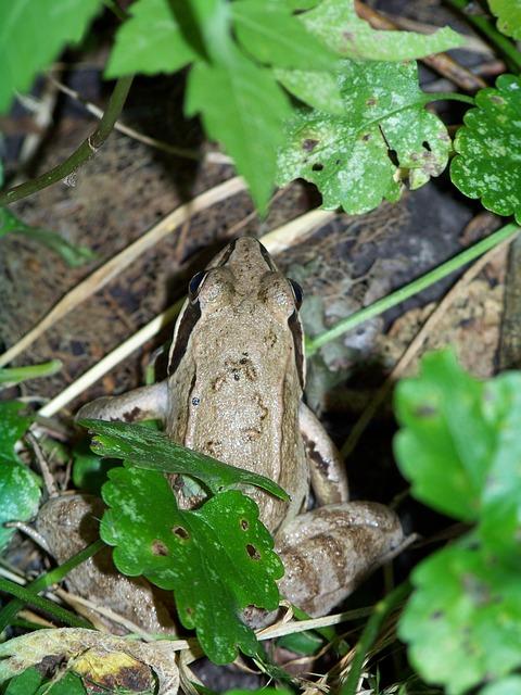 Free frog macro pond amphibian frog pond