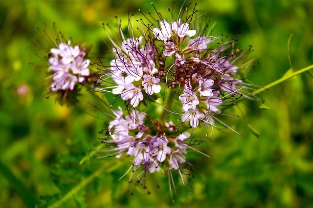 Free meadow flower pink flower flowers plant