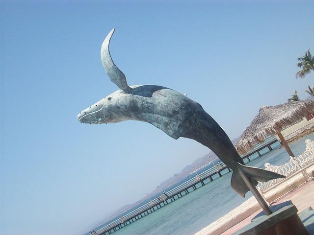 Free la paz mexico whale animal sea statue