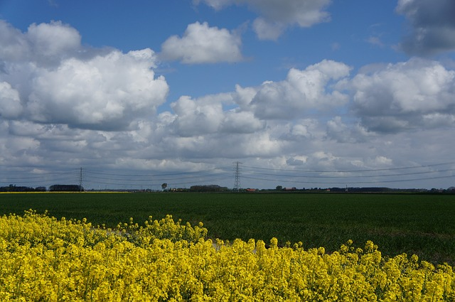 Free rapeseed yellow landscape nature