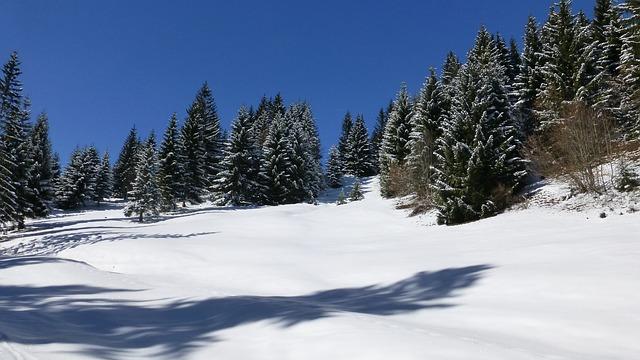 Free allgäu winter snow forest trees sun light shadow