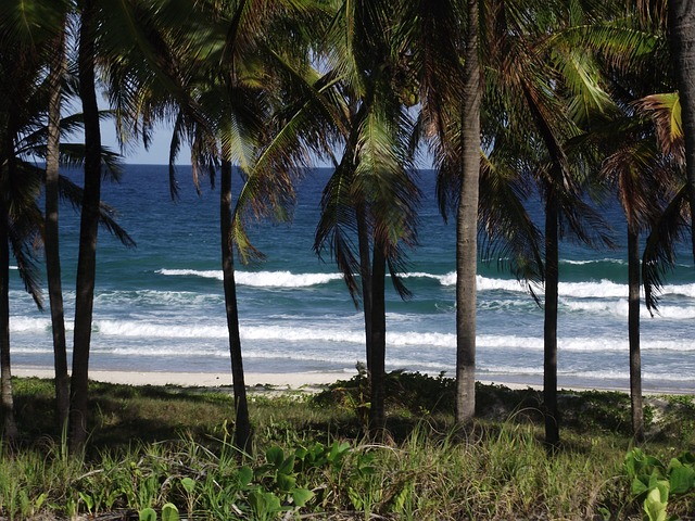 Free mar coconut trees costa beach trees