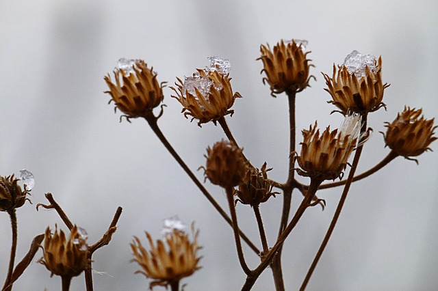 Free dry plant winter cold close-up wintry nature