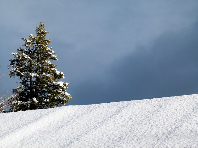 Free winter fir tree sky nature snow cold frosty