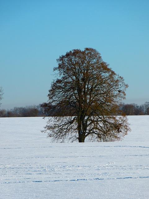 Free winter snow landscape snowy tree wintry