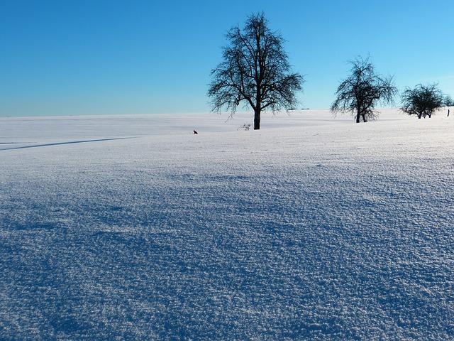 Free winter snow landscape snowy tree trees wintry