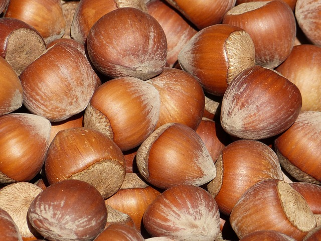 Free nut nuts hazelnuts shell brown market food tasty