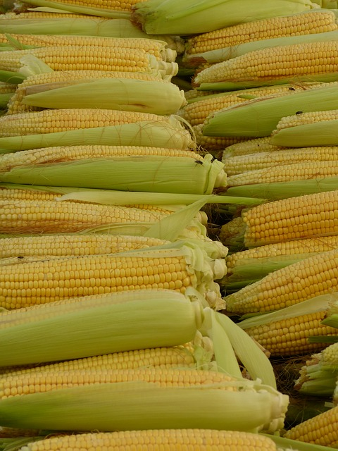 Free corn corn on the cob corn kernels food eat