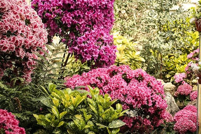 Free flowers plant flora garden