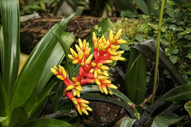 Free bromeliad aechmea flower plant flora garden