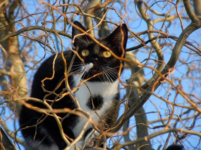 Free                cat hidden animal climb tree lurking