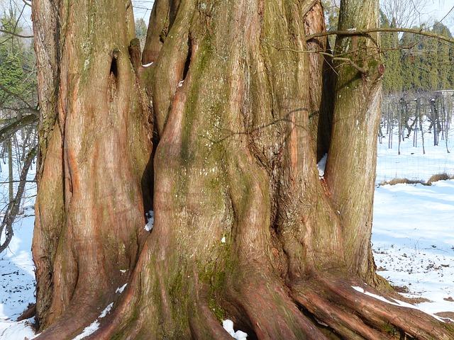 Free sequoia log tribe geoskop redwood