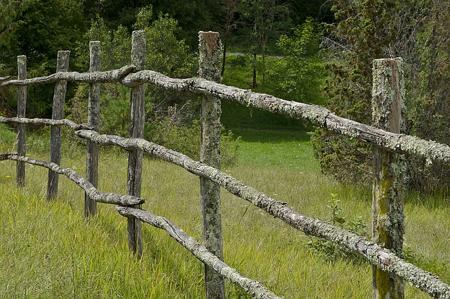 Free france fence wood wooden grass plants forest