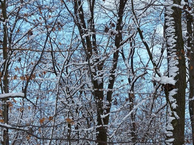 Free forest trees snowy branches aesthetic snow icy
