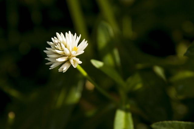 Free macro flower white white flower nature grass