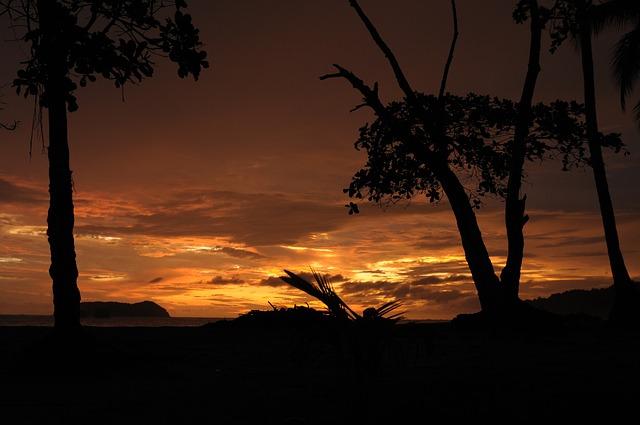 Free sunset sun trees nature light sky clouds