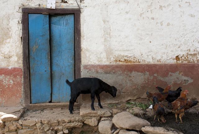Free door blue door cattle goat rock