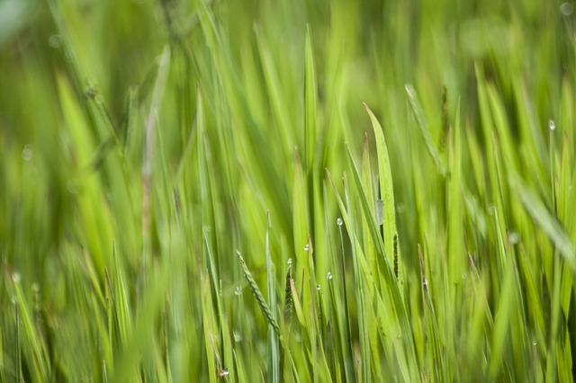 Free green grasses nature blade of grass plant grass