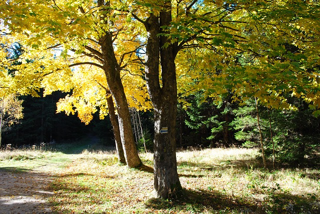 Free tree autumn fall foliage nature