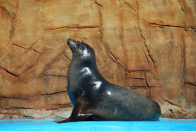 Free animal sea lion zoo