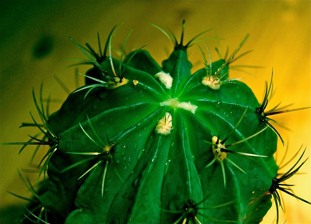 Free cactus spur exotic green plant aua nature well
