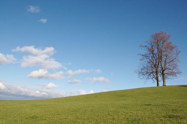 Free tree switzerland appenzellerland