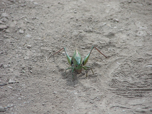 Free bugs animals insects