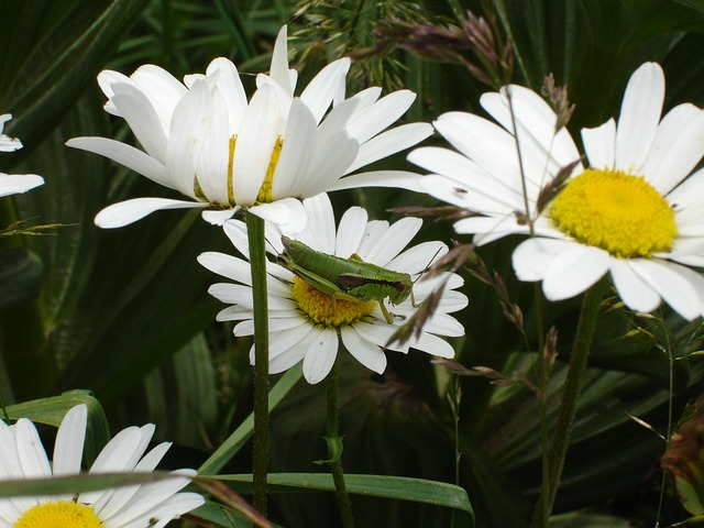 Free flower insect cricket