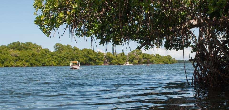 Free Laguna de la Restinga national park on the Isla Margarita