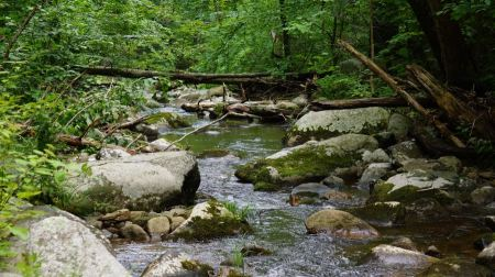 Free Middle Prong of the Little River Shenandoah