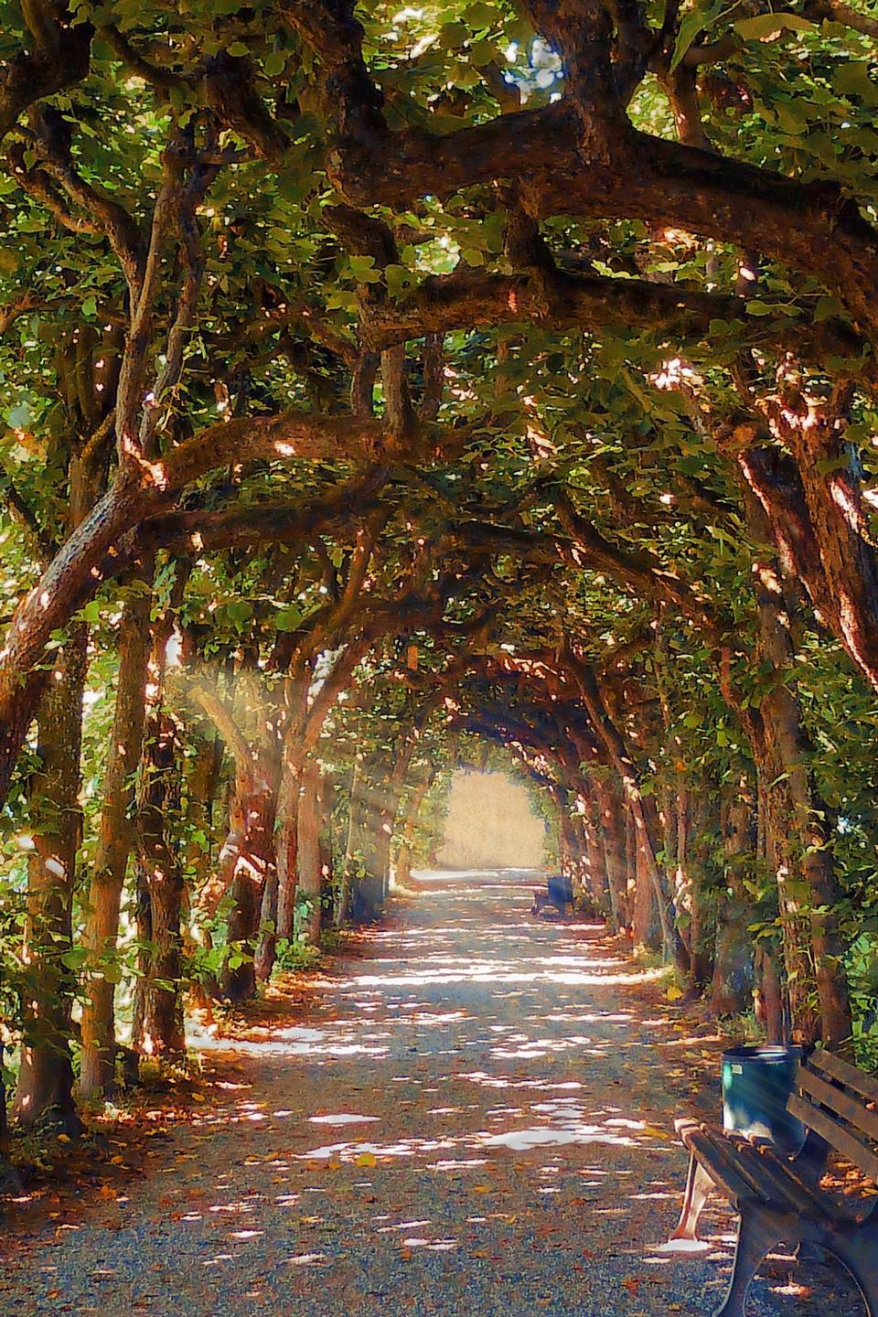 Free Beautiful perspective of an autumn golden alley of lime trees